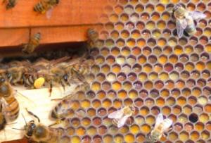 polline3