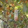 NOVITA' Tap Trap, trappola per insetti – Vaso Trap, trappola per mosche